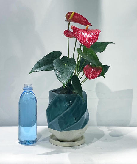 【観葉植物】アンスリウム / screw pot tall blue