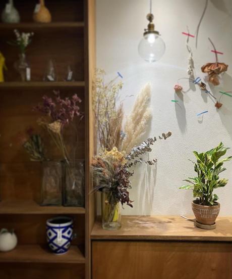 【観葉植物】カラテア ローウイゼ エンペラー / ethnic pot