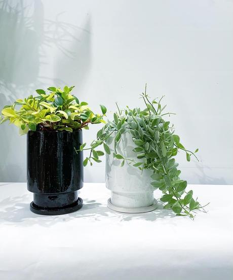 【観葉植物】ディスキディアシュガーエメラルディglaze tall pot white