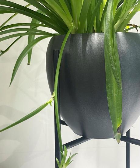【観葉植物 】オリヅルラン / Round Pot  metallicblack / アイアンポットスタンド
