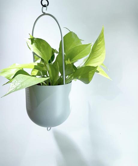 【観葉植物】 ポトスライム ハンギングポットS