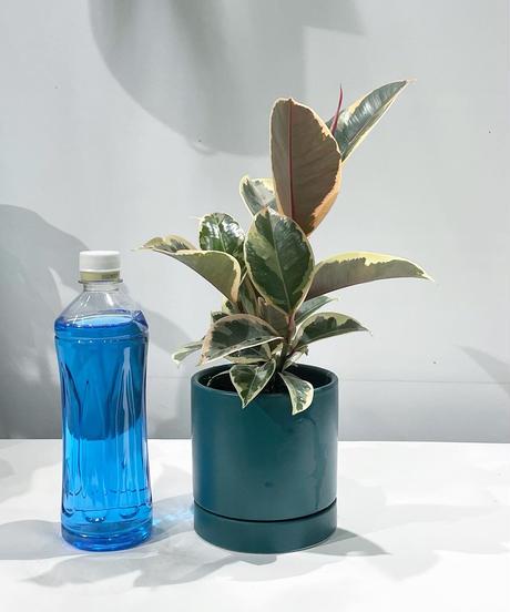 【観葉植物 】フィカス・ティネケ / SYLINDER MAT POT teal green