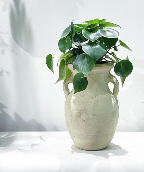 【観葉植物 】 ペペロミア ジェイド  /壺