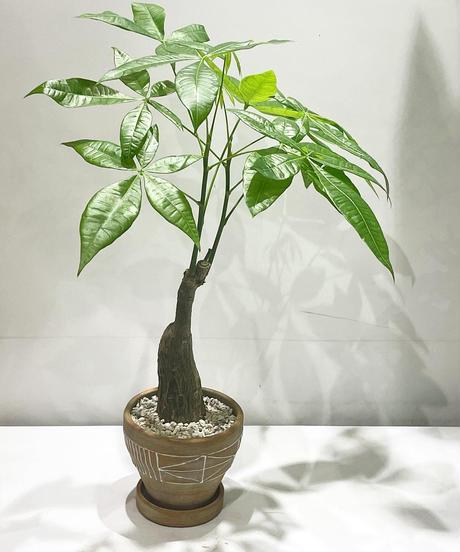 【観葉植物】パキラ  / ethnic pot