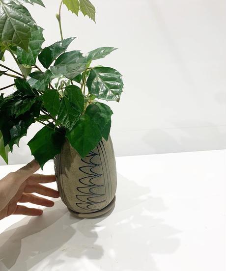 【観葉植物】グレープアイビー /  モロッカンポット