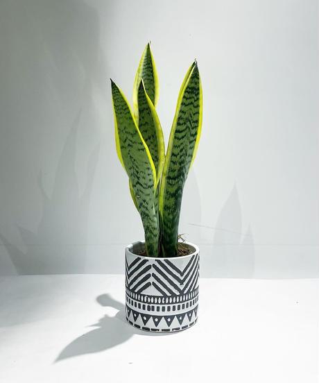 【観葉植物 】サンセベリア ローレンチ   /  etnic pot cover