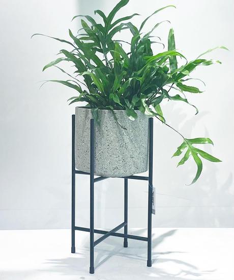 【観葉植物 】カンガルーファーン /stone pot stand