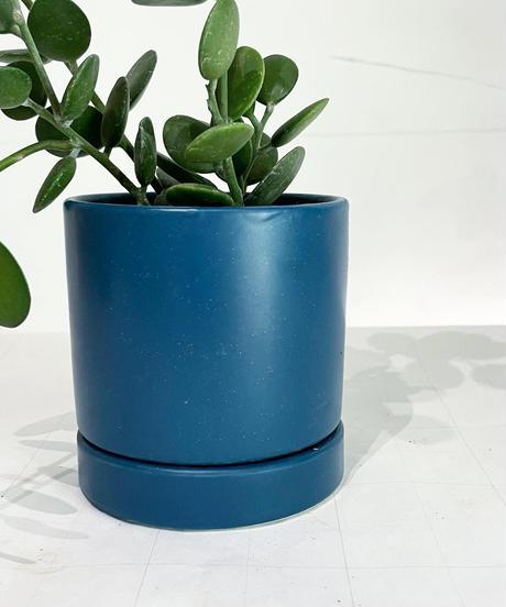 【観葉植物 】グリーンドラム /sylinder  mat pot       (yellow /blue)