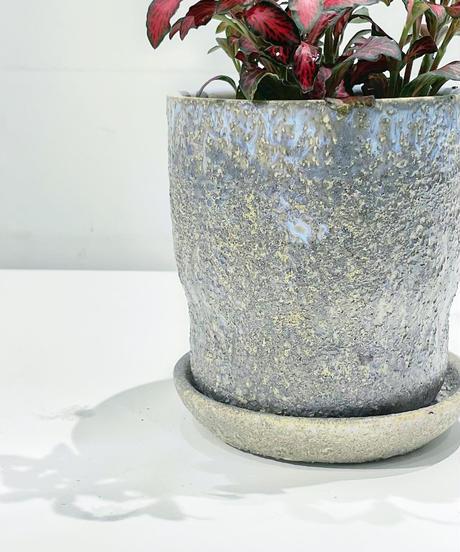 【観葉植物 】 フィットニア  /  baruna スカイグレー