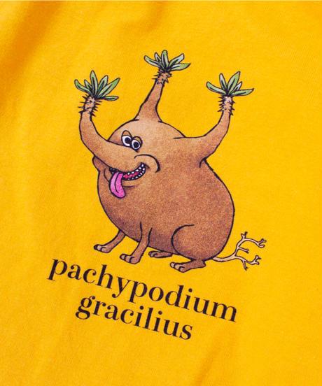 PACHYPODIUM  GRACILIUS TEE【UNISEX】