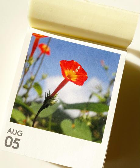 数量限定予約販売『YASOUEN365日野草の日めくりカレンダー2022』
