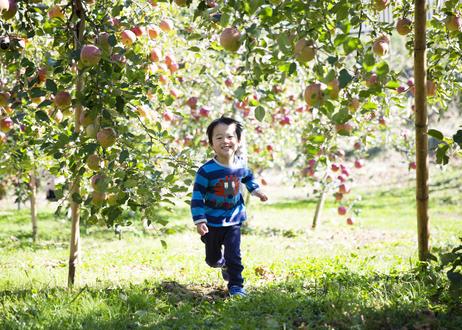 【ギフト】りんご屋まち子のアップルシードル・アップルジュース