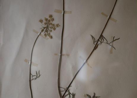herbier no.2