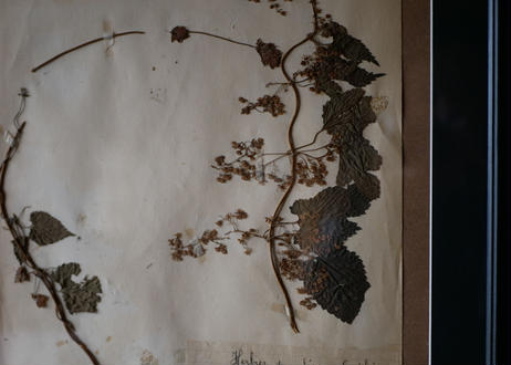 herbier no.3