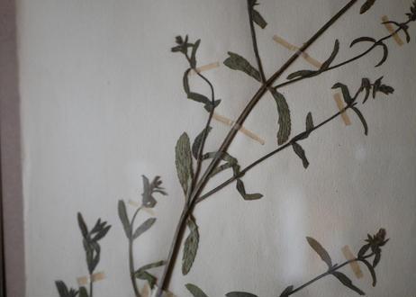 herbier no.4