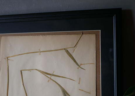 herbier no.7