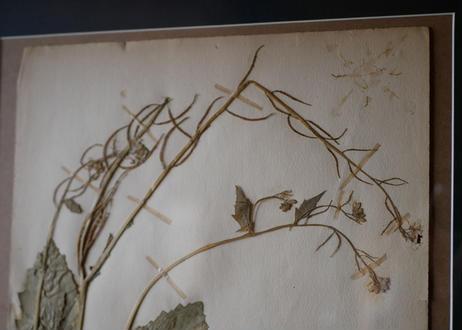 herbier no.5
