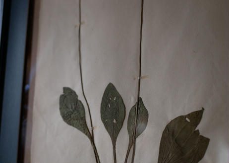 herbier no.6