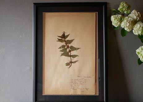 herbier no.1