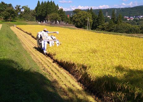 ★★新米★★【特別栽培】新潟県魚沼産コシヒカリ10kg