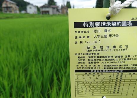 ★★新米★★【特別栽培】新潟県魚沼産コシヒカリ20kg