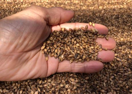【NEW!】無添加 大麦 玄麦200g