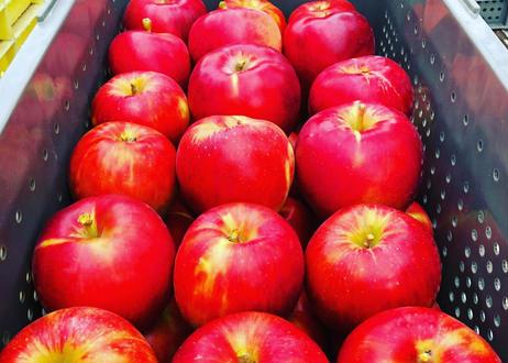 りんごジュース【6本セット】