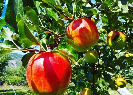 りんごジャム【4個セット】
