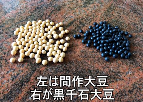 間作大豆(極小粒)の種50粒 送料無料