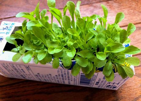 種まきのしかた【解説】 ~初めての野菜作り選べる種セット~