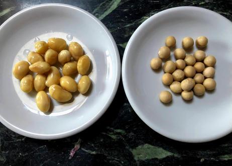 極大粒白大豆もっちり&甘い、たまふくらの種40粒 送料無料