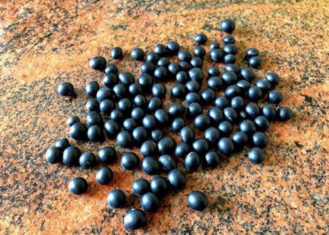 極小粒インターフェロンγをつくる驚異の黒千石大豆の種 送料無料