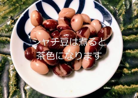 2020年新豆 シャチ豆(パンダ豆)500g【送料無料】