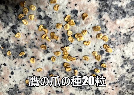 カイエンヌペッパー(カイエンペッパー)唐辛子の種 20粒