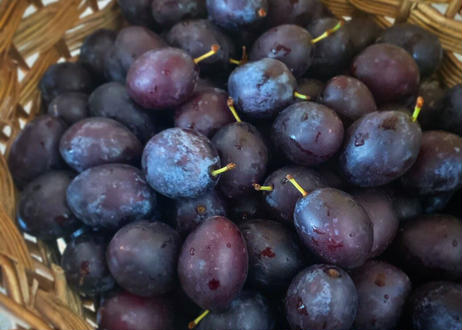 ties季節のジャム-神無月-<サンプルーンと葡萄、アールグレイのジャム(130g)>