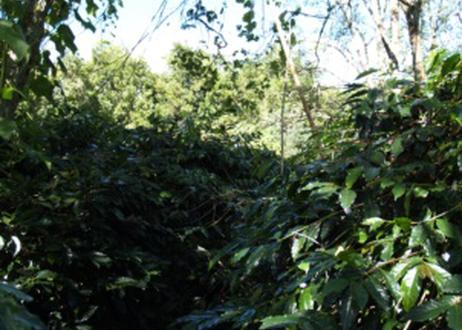 マンデリン ビンタンリマ インドネシア 500g