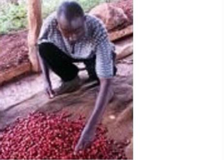 ケニア ガチュヤニ 100g