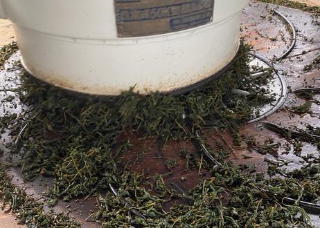 【b-1】駄農園紅茶  べにふうき2020