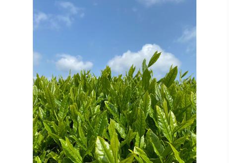 【a- 02】    特蒸し茶よんこん シングルオリジン8種 飲み比べセット 2021