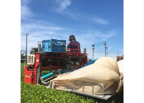 【a-01】特蒸し茶Noシリーズ 駄農園定番4種飲み比べセット2021