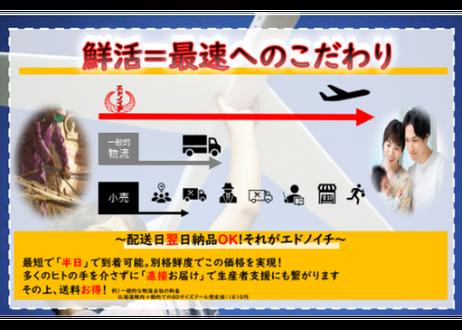 【愛媛県産鰤】数量限定!身が引き締まりプリプリぶりのフィーレ