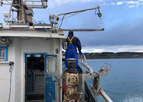 ≪お得な活ホタテ≫「活きた帆立を食べてもらいたい」魅せられて帆立漁を親子2世代で行っている漁師の物語