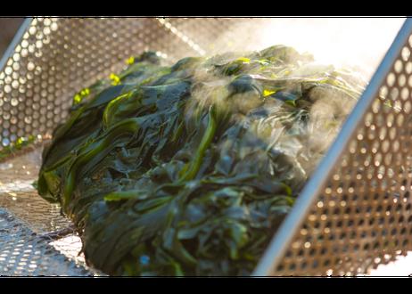 【宮城十三浜産海藻】≪乾燥セット≫とろろ/わかめ/ふのり/ひじき4種セット