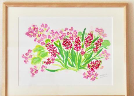 ヒヤシンスと桜草