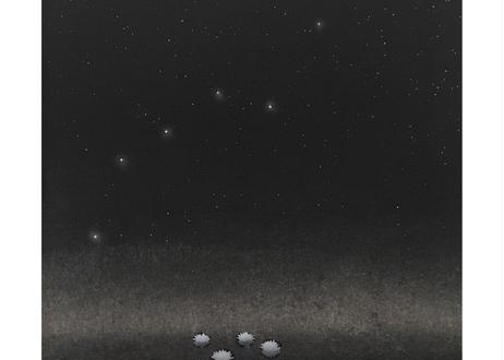 睡蓮と北斗七星