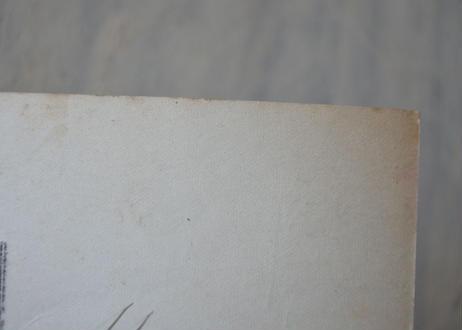 ヤドリギ やどりぎ アンティークポストカード 冬の林のヒイラギとヤドリギ
