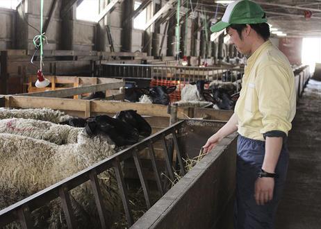 羊と雲の丘オリジナルサフォークラムジンギスカン ラム肉450g