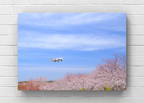 B787と桜