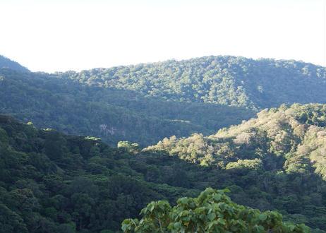 パナマ デボラ農園 ゲイシャ・シンビオシス 50g