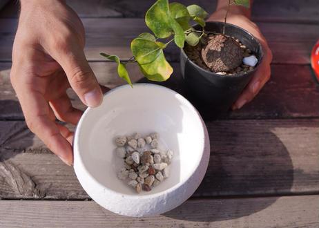 初心者の方向け植え替え 鉢&土セット